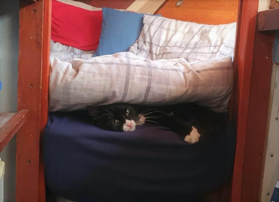 Cat Under V Berth